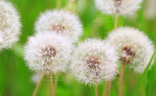 春の写真・画像素材[421146]