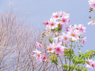 花の写真・画像素材[424528]