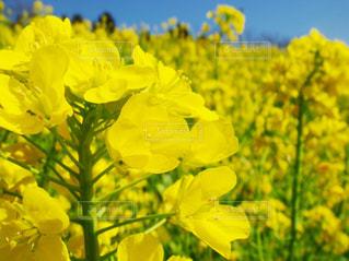 花の写真・画像素材[424534]