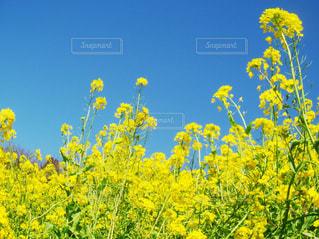 春の写真・画像素材[424535]