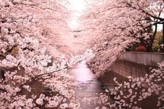 近くの花のアップの写真・画像素材[1098455]