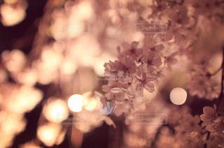 近くの花のアップの写真・画像素材[1098460]