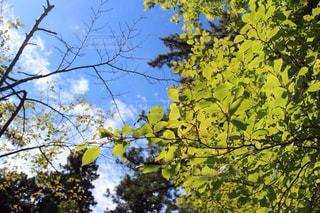 森林の写真・画像素材[426099]