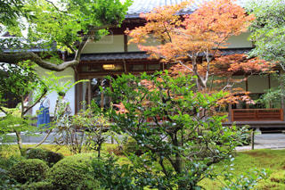 鈴虫寺の写真・画像素材[426127]