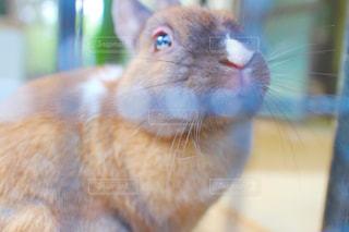 猫の写真・画像素材[611855]