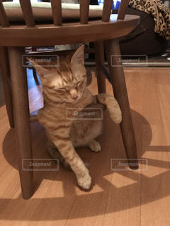 猫の写真・画像素材[421294]