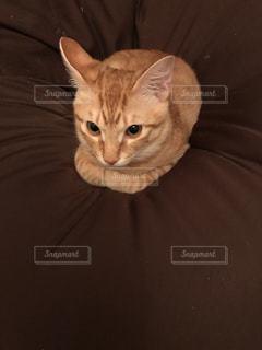 猫の写真・画像素材[421306]