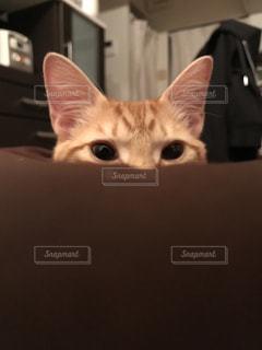 猫の写真・画像素材[421308]