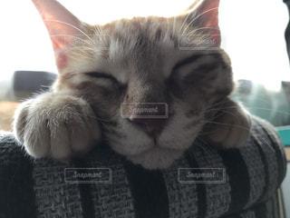 猫の写真・画像素材[421312]