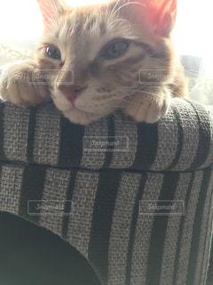 猫の写真・画像素材[421313]