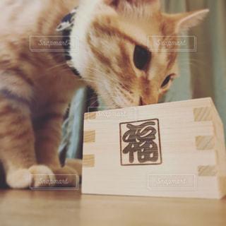 猫の写真・画像素材[424446]