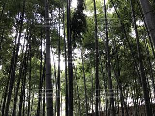 自然の写真・画像素材[427983]
