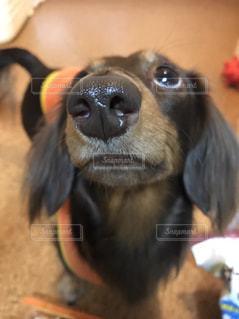 No.422919 犬