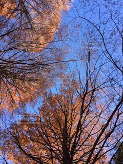 自然の写真・画像素材[421571]