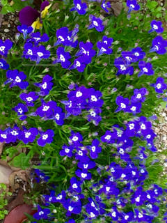花の写真・画像素材[440334]