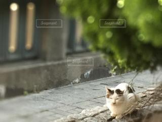猫 - No.449138