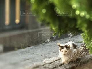 No.449140 猫