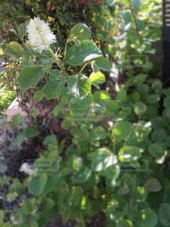 花の写真・画像素材[452845]
