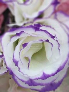 花の写真・画像素材[467185]