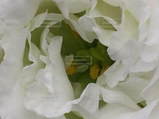 花の写真・画像素材[467200]