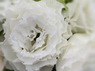 花の写真・画像素材[467212]