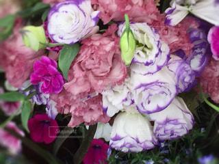 花の写真・画像素材[467215]