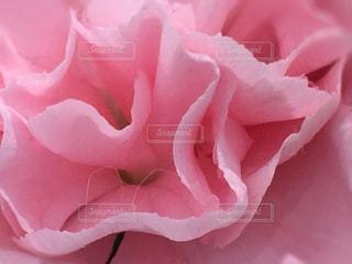 花の写真・画像素材[467273]