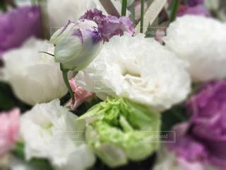 花の写真・画像素材[467299]