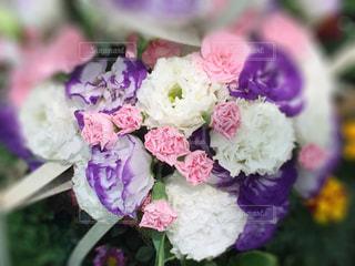 花の写真・画像素材[467300]