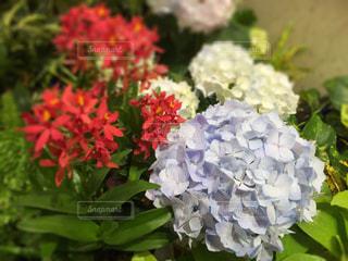 花の写真・画像素材[474200]