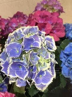 花の写真・画像素材[474201]