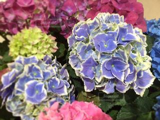 花の写真・画像素材[474203]