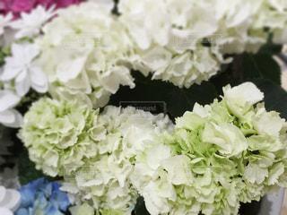 花の写真・画像素材[474208]