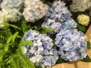 花の写真・画像素材[480740]