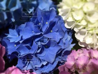花の写真・画像素材[481214]
