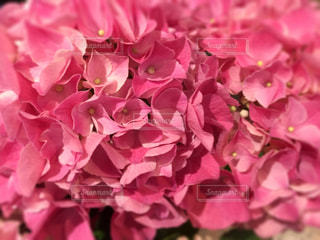 花の写真・画像素材[481218]