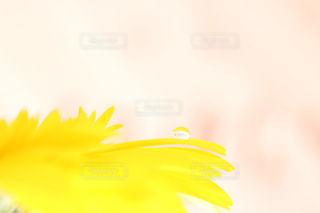 花の写真・画像素材[511009]