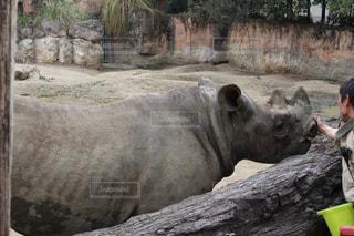 動物の写真・画像素材[518161]