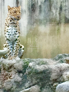 動物の写真・画像素材[551331]
