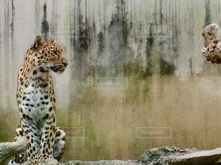 動物の写真・画像素材[551332]