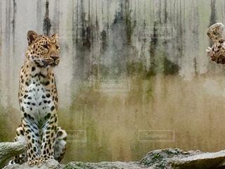 動物の写真・画像素材[551333]