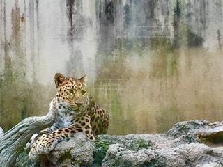 動物の写真・画像素材[551334]