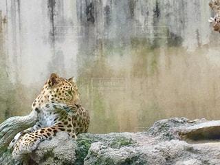 動物の写真・画像素材[551335]
