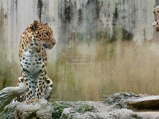 動物の写真・画像素材[551336]