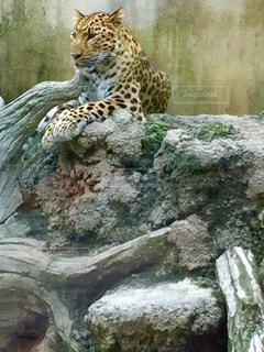 動物の写真・画像素材[551337]