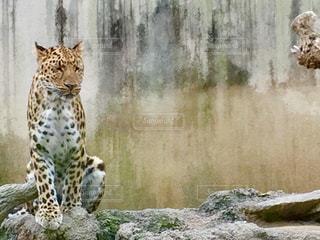 動物の写真・画像素材[551353]