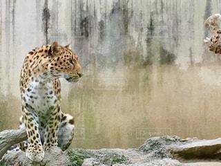 動物の写真・画像素材[551354]