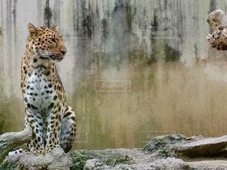 動物の写真・画像素材[551356]