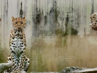 動物の写真・画像素材[551359]
