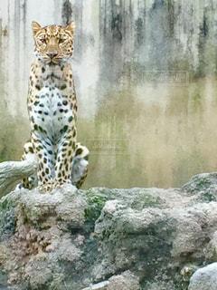 動物の写真・画像素材[551360]